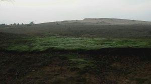 Tankmos in het Mosselse Zand