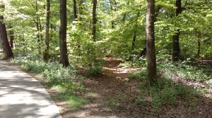 foto Hollandse Weg bij de Bosbeekweg