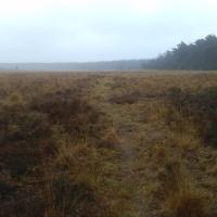 Reemst: een Koningsweg in de heide