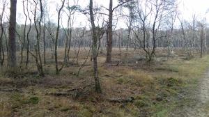 Uitgestoven laagte langs het Mosselsepad