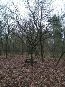 Eikenboom in bos